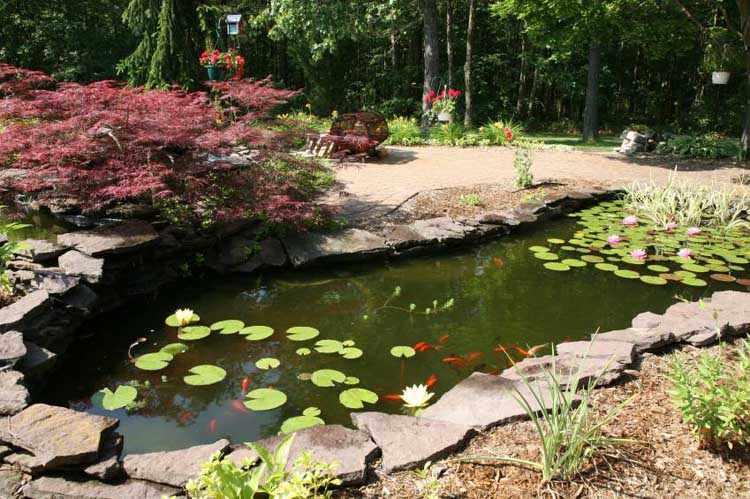 Como hacer un estanque con plantas peces tortugas for Depuradora estanque