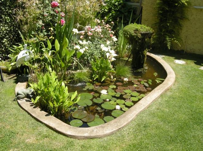 Como hacer un estanque con plantas peces tortugas for Construir estanque