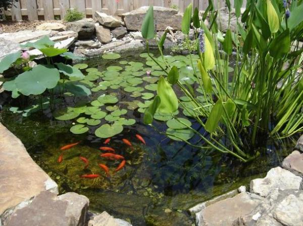 Como hacer un estanque con plantas peces tortugas for Plantas para estanques de peces