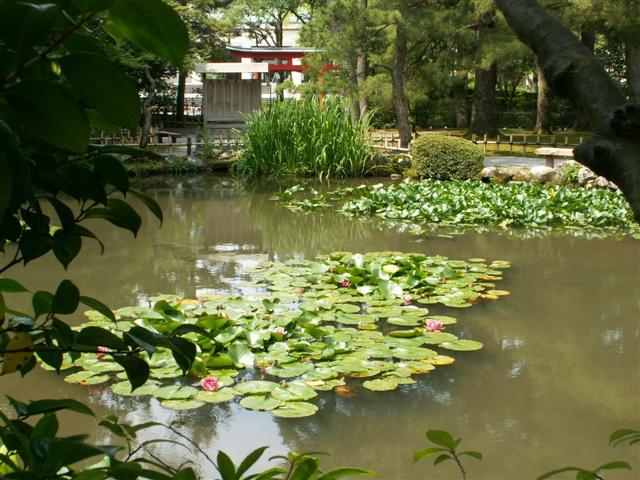 estanque con vegetación